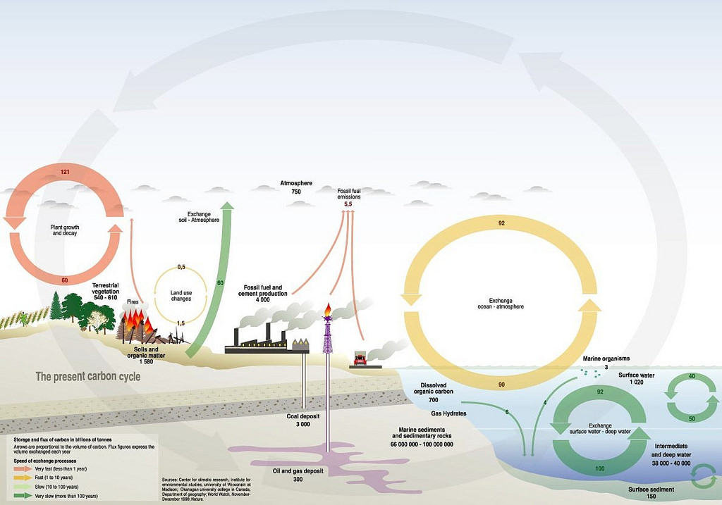 total carbon cycle