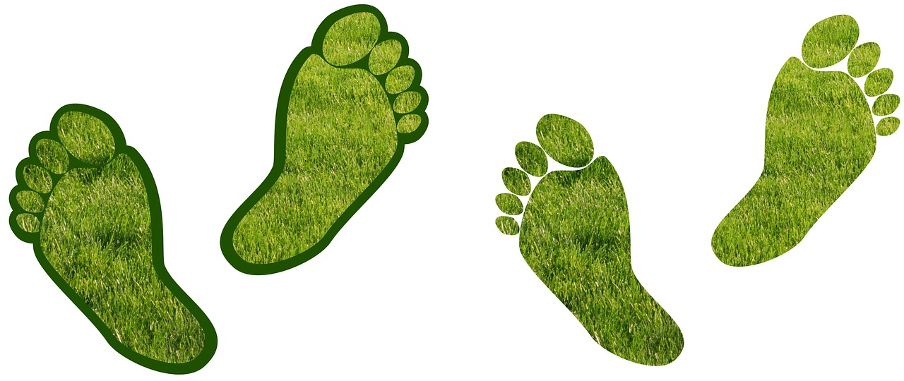 Best (& Most Effective) Ways To Reduce Your Carbon Footprint