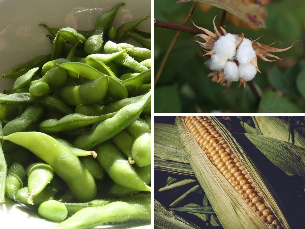 Types Of GMO Crops & Foods, What Traits They're Engineered For, & What They're Used For
