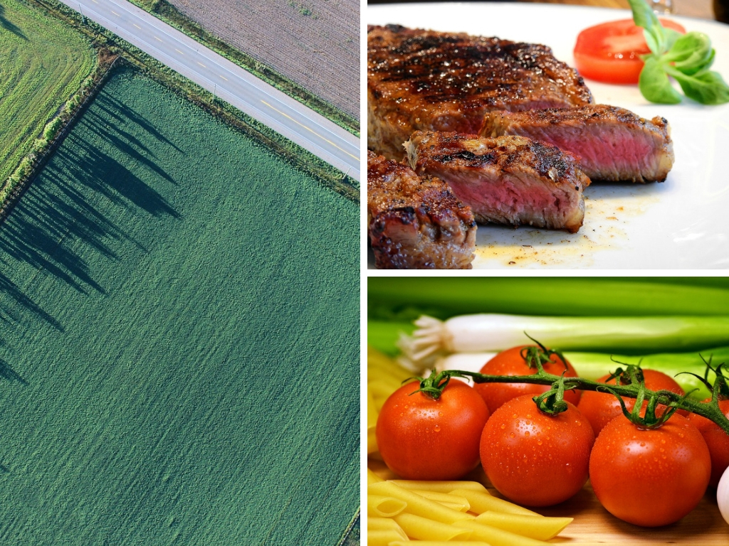 Types Of Food Diets That Use The Most & Least Amount Of Land