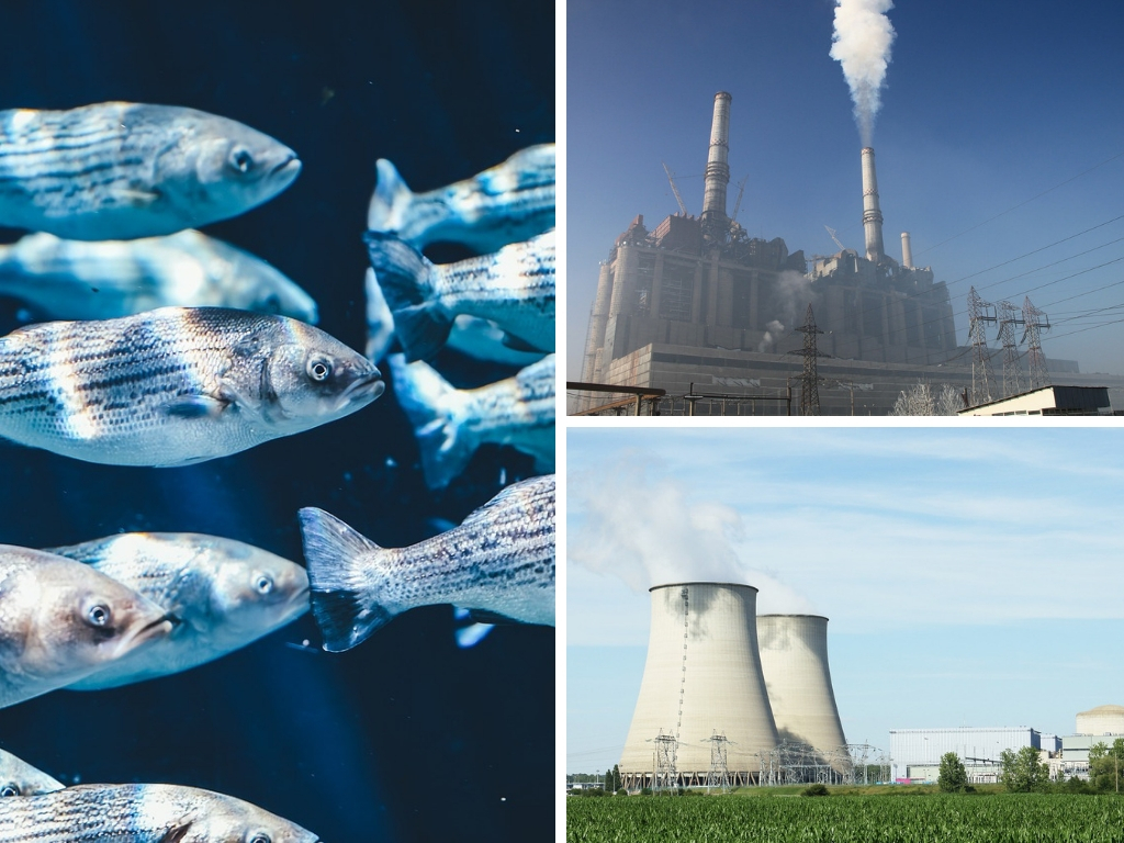 The Impact Of Energy & Electricity Production On Animals & Wildlife