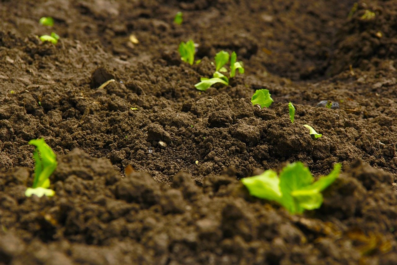 Is Agricultural Topsoil A Renewable Resource?