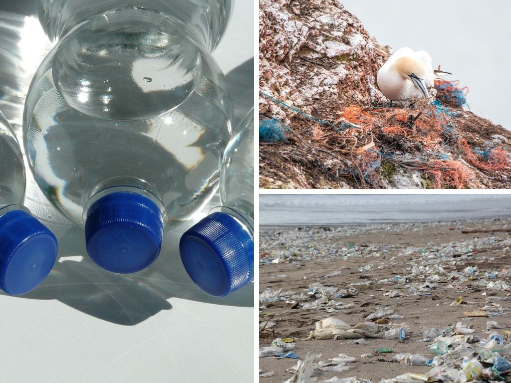 Potentially Harmful Effects Of The Use Of Plastic (On The Environment, Wildlife/Animals, Humans & Health, & The Economy)